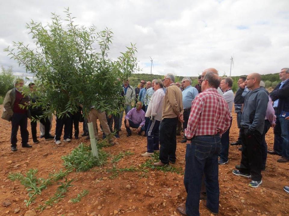 Agricultores villacañeros se forman en cursos de Apicultura y Poda en verde del almendro
