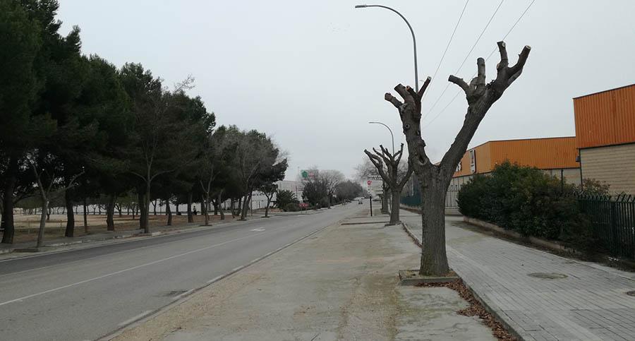 Campaña de poda y terciado de árboles