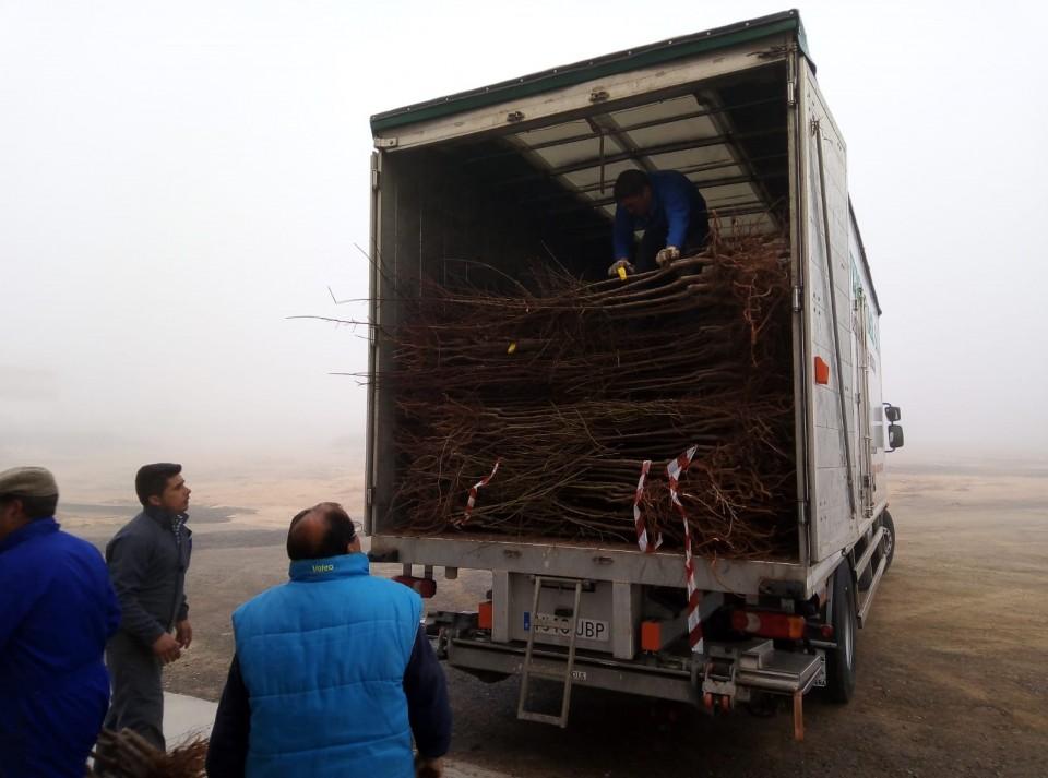 Nuevo reparto de 3.000 almendros a través del proyecto con la cadena de hoteles Accor
